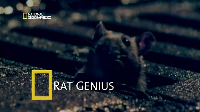 National Geographic - Hayvan Belgeselleri Boxset 20 Bölüm DVBRIP Türkçe Dublaj